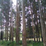 Resurrection Fest 2016 - Camping B - Naseiro (4)